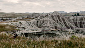 Alone in the Vastness. Big Horn Sheep sitting alone, contemplating the South Dakota Badlands, September 2016, empty vastness Stock Image