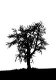 Alone. Vector. Illustration of isolated tree on white background. Vector Stock Illustration