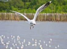Alone white seagull flying in the sky over the sea Stock Image
