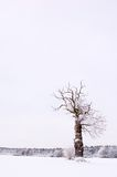 Alone winter tree Stock Images