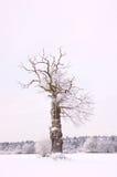 Alone winter tree Stock Photo