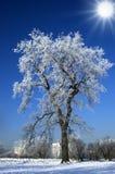 Alone winter tree Stock Image
