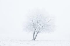 Alone winter tree Stock Photography