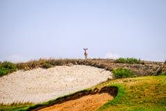 Alone Young Arabian Sand Gazelle staring at camera. Saadiyat Golf Course, Abu Dhabi stock image