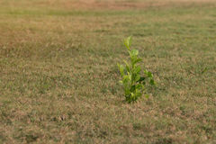 Alone young green plant stand alone. Strong in environment royalty free stock image