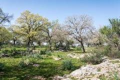 Alonei Abba naturreserv på våren Royaltyfria Foton