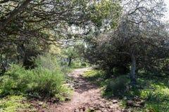 Alonei Abba naturreserv på våren Royaltyfria Bilder