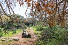 Alonei Abba naturreserv på våren Royaltyfri Fotografi