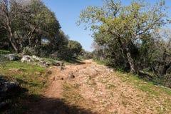 Alonei Abba naturreserv på våren Arkivfoton
