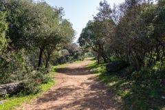 Alonei Abba naturreserv på våren Fotografering för Bildbyråer