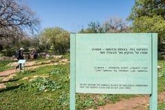 Alonei Abba naturreserv på våren Arkivfoto