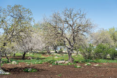 Alonei Abba naturreserv på våren Royaltyfri Bild