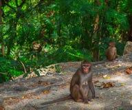 Alonely-Affe im Wald Lizenzfreie Stockfotografie