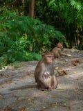 Alonely-Affe im Wald Lizenzfreies Stockfoto