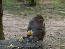 Alonely-Affe im Wald Stockfoto