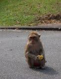 Alonely-Affe im Wald Stockbilder