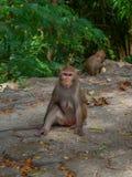 Alonely-Affe im Wald Stockbild