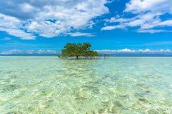 Alonelyboom die zich in het duidelijke water bevinden Royalty-vrije Stock Afbeelding