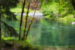 Upper Clackamas River In Mt. Hood National Forest. Along the banks of the Upper Clackamas River in Mt. Hood National Forest royalty free stock images