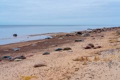 Along the beach are larger and smaller stones. The sandy coast and horizon of the Baltic Sea; the sea is calm, without waves; along the beach are larger and royalty free stock photos