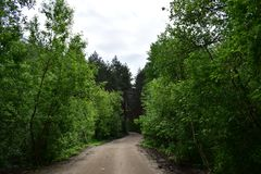 Along the forest road branches of trees and shrubs form a green wall. Under the spreading branches of trees winding road stock photos