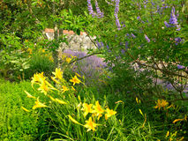 Along the Garden Path. Yellow daylilies along a garden path in the Carolinas Royalty Free Stock Photo
