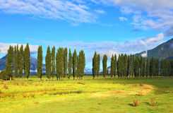 Along green fields avenues of cypresses. Grow. Rural areas in the Chilean Patagonia. Mountain range is visible in the distance Stock Photo