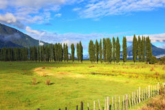 Along green fields avenues of cypresses grow. Rural areas in the Chilean Patagonia. Along green fields avenues of cypresses grow. Mountain range is visible in Stock Photography