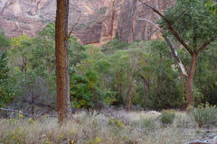 Along the Grotto Trail, Zion National Park, Utah Royalty Free Stock Image