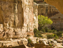 Along Hichman Bridge trail. View of the canyon walls along the trail to Hickman Bridge in Capital Reef National Park Royalty Free Stock Photography