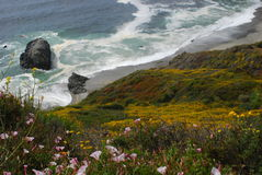 Along Highway One. Beautiful sandy beaches, and rocky shores along California's Highway One coast highway. Wildflowers blanket the rocks and cliffs Royalty Free Stock Photo
