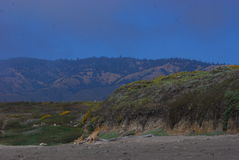 Along Highway One. Fog rolls in along California's highway one. Wildflowers blanket the landscape, surreal coloring from the fog, sandy shores. Sea lions bask Royalty Free Stock Photos