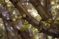 Leaf in Big Pine Canyon, Inyo National Forest, Sierra Nevada Range, California 2 Stock Photo