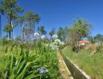 Hiking the levadas, Madeira Royalty Free Stock Photos