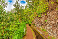 Along the Levada, Madeira Royalty Free Stock Images