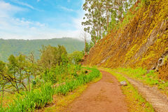 Along the Levada, Madeira Stock Images