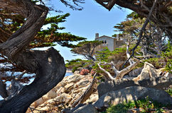 Along the 17 Mile Drive Royalty Free Stock Photography