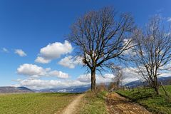 Along the path that leads to the mountains. A tree along the path that leads to the mountains Stock Photos