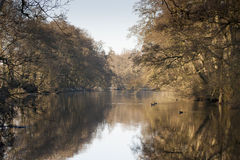 Along the River Derwent Royalty Free Stock Image