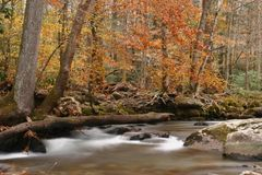 Along the Stream in the Smokies. Scenic autumn stream in the Great Smoky Mountains.  Shot at low shutter speed for silky effect Royalty Free Stock Photos