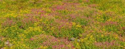 Along the Trail Glacier National Park Stock Images