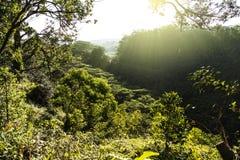 Along the Waikomoi Hiking Trail on Maui at Sunrise Stock Photo