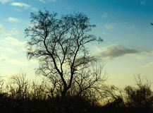 Aloone el árbol derecho Foto de archivo libre de regalías