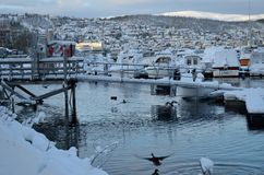 Alot of ducks swimming amongst snow covered boats Royalty Free Stock Photos
