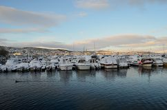 Alot of ducks swimming amongst snow covered boats in marina Royalty Free Stock Image