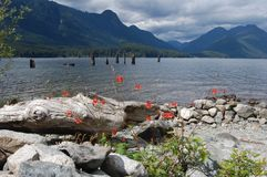 Alouette Lake Panorama 2. View from the camping spot on Alouette Lake - Vancouver-BC. June 2013 Stock Images