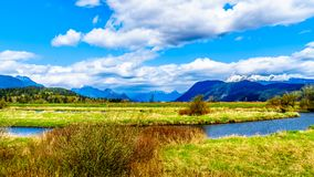 The Alouette River seen from the at the Pitt Polder near Maple Ridge in British Columbia. Canada with the Golden Ears Mountain in the background royalty free stock photos