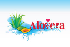 Alovera & Pappaya Stock Photography
