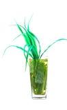 Alovera verde fotografia de stock