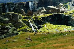 Alp, alpine pasture Stock Images
